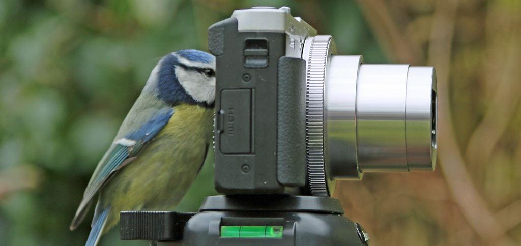 Bird Camera Garden